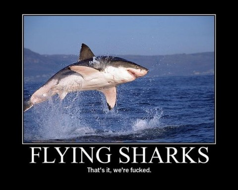 flying_sharks-480x384.jpg